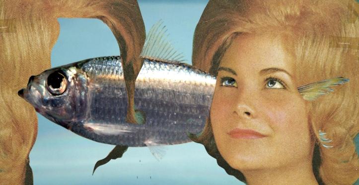 sardine-ontwerp